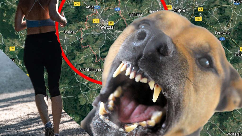 Frau joggt an Feld entlang – plötzlich rennt blutrünstiger Hund auf sie zu