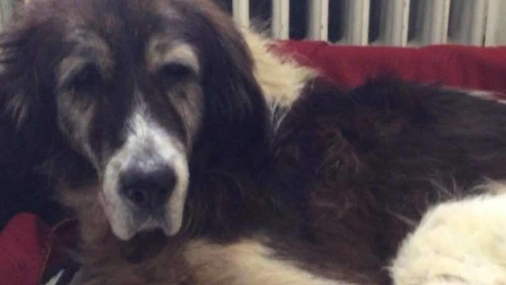 Herzzerreißender Aufruf: Tierheim sucht letzten Dosenöffner für diese todkranke Hündin