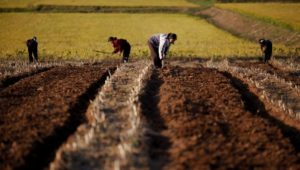 Nordkorea: Miserable Ernte – UN warnt vor Hungersnot im isolierten Land