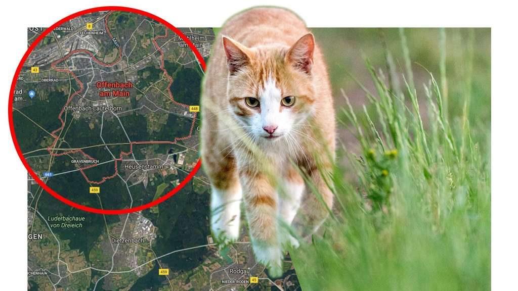 Gießen: Katze vergewaltigt! Was Polizei im Genitalbereich entdeckt, macht sprachlos